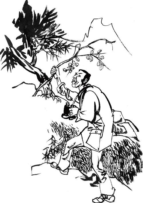 树木石头手绘线稿图片